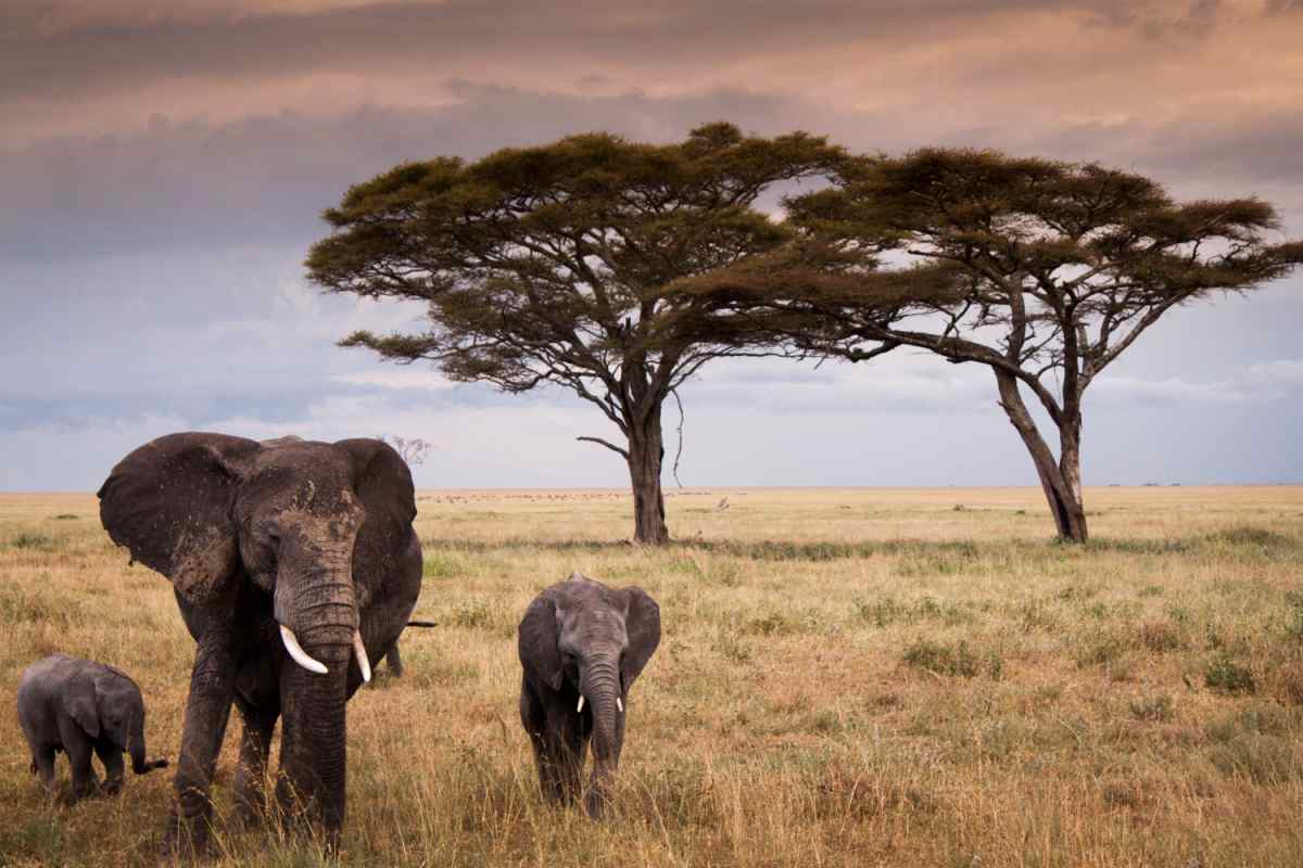 Elephant-safaris