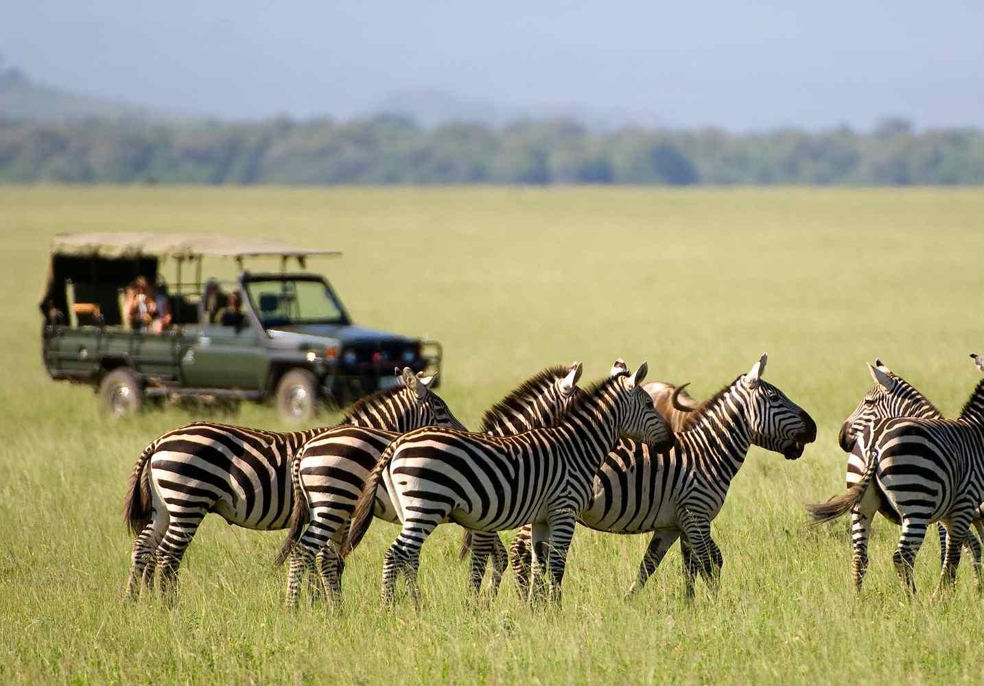 Zebra-2009 on Safari