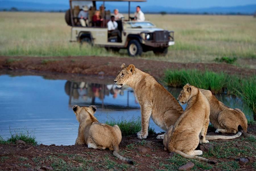 Kenya & Tanzania Safari Circuit