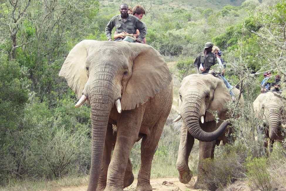 Kenya Big Five Safari